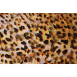GEORGETTE PRINTED fabric for Kurti, Saree, Salwar, Dupatta GF049
